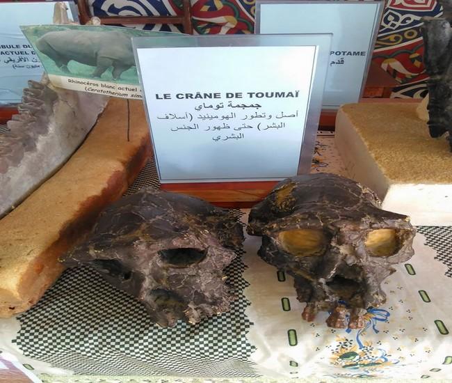 semaine-de-la-science-au-tchad-4