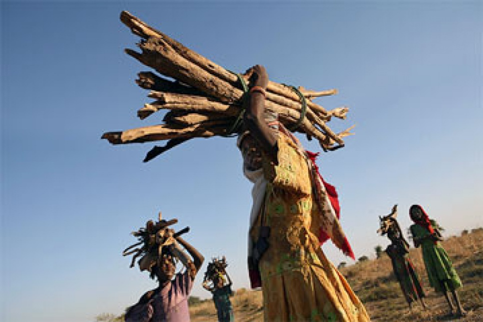 Tchad: les N'Djaménois indignés par l'arrestation de neuf femmes «prises en flagrant délit» de ramassage de bois mort