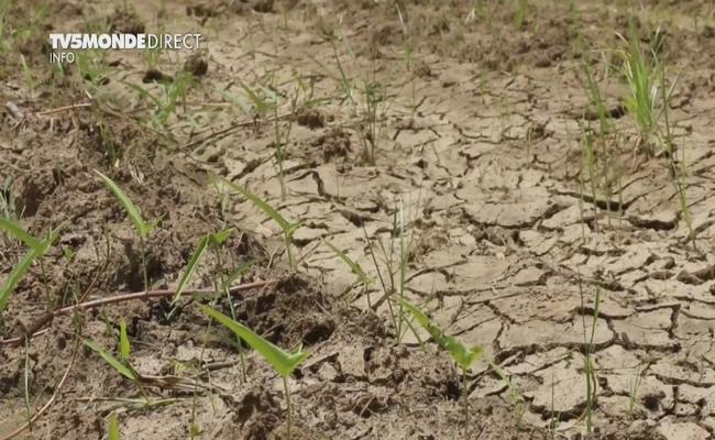 Tchad: le manque de pluies inquiète les cultivateurs